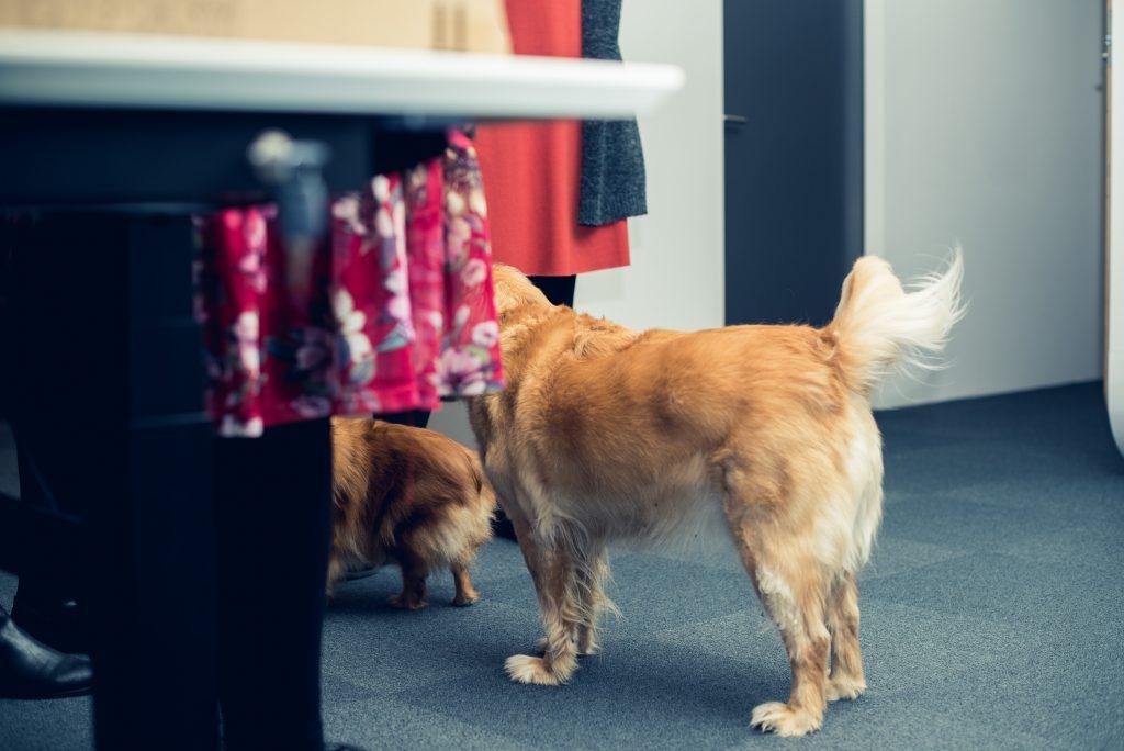 I 2020 har vi udbredt kendskabet til vores fredagshunde til det meste af landet – heriblandt TV2 Østjylland, der var et smut forbi vores hovedkvarter på Højvangen i januar.